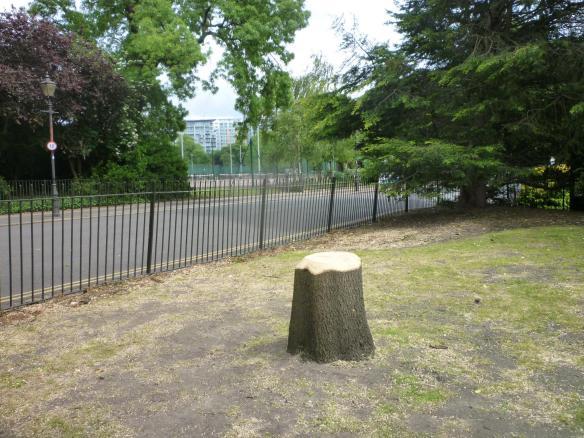 Mature tree removed