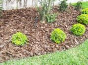 bark_mulch